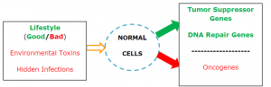 normal-cells-rule